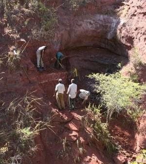New dinosaur species a rare find in Tanzania