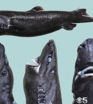 Researchers discover glow-in-the-dark shark