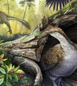 Seeds Saved Bird Ancestors From Dinosaur Extinction, research