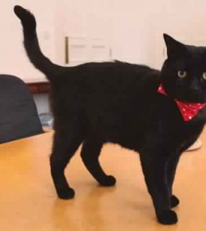 Gladstone the British cat lands Treasury job