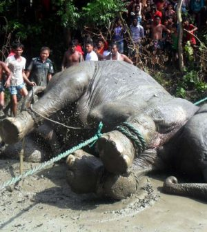 "Flood-hit elephant that travelled 1700km dies in Bangladesh ""Details"""
