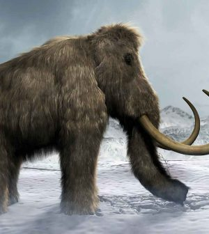 New research finds last woolly mammoths died of thirst