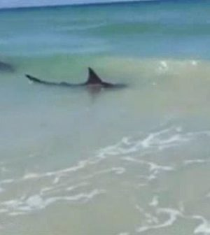 New Smyrna Beach: Sharks bite three people in 2 hours