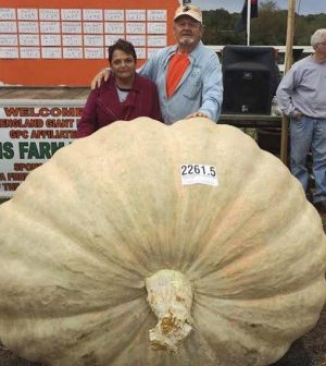 2261 Pound Pumpkin Sets Record [Video]