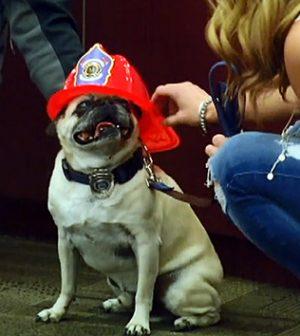 Jaxon: Idaho dog named town's 'Hometown Hero'