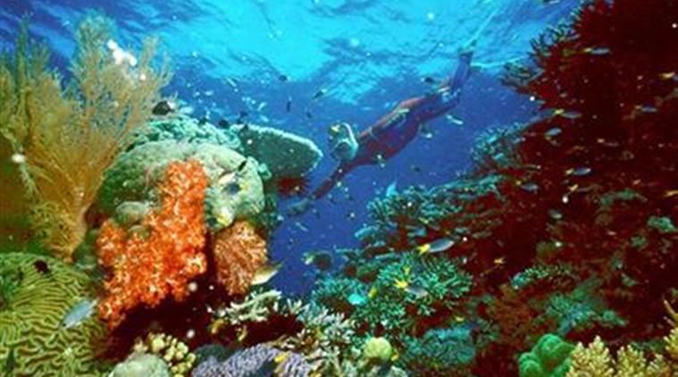 British tourist dies on the Great Barrier reef