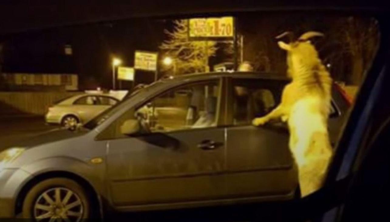 Goat Carrickfergus terrorises locals after being denied entry to a shop (Watch)
