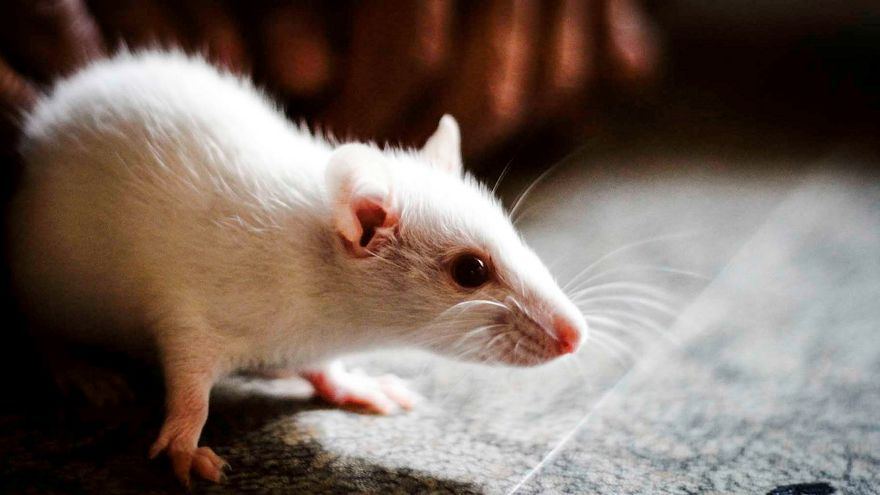 Mouse on a plane? Mouse found on San Francisco-bound flight causes 4-hour delay