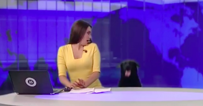 Dog interrupts Russian news broadcast, Video Seen By 3 Million