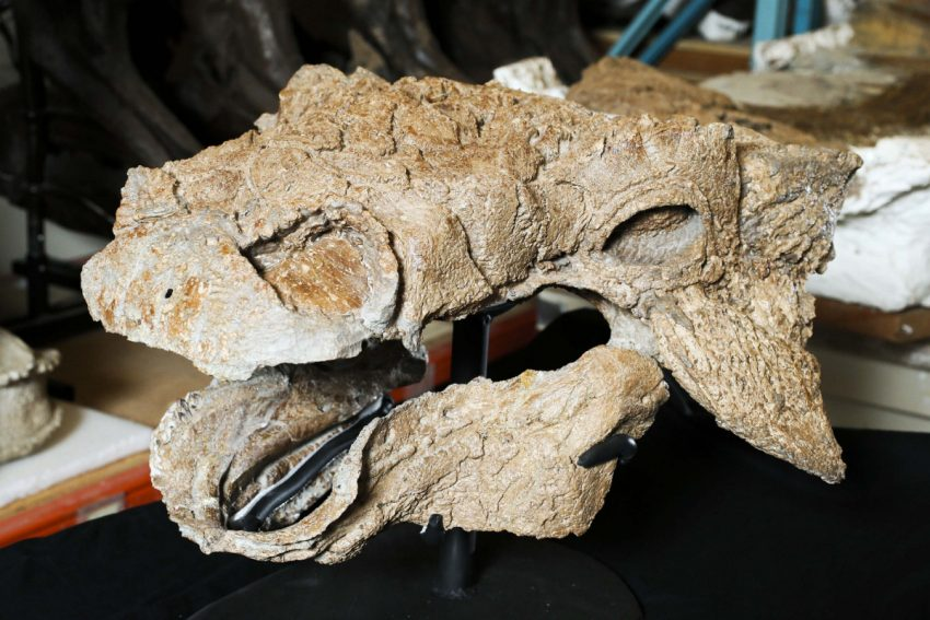 'Ghostbusters' Dinosaur Fossils Found In Montana; says new research