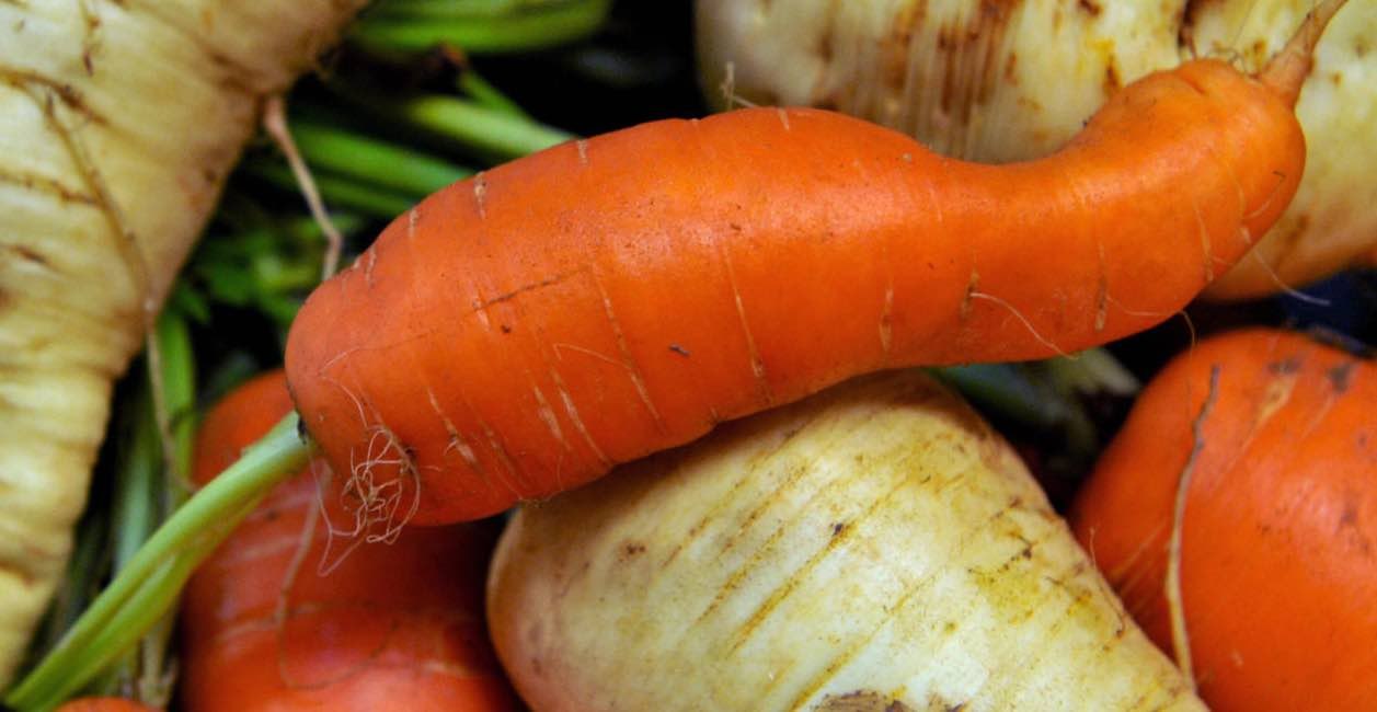 'Wonky veg' should be sold as standard to cut food waste, Reports