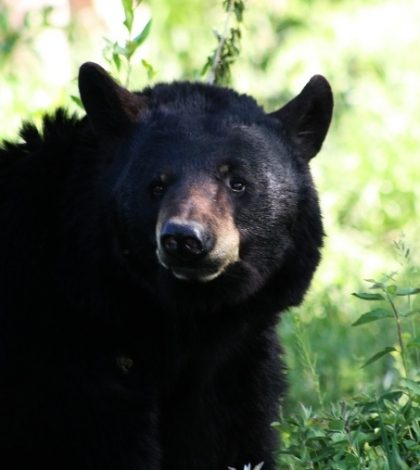 16 Year Old Killed By Bear In Alaska