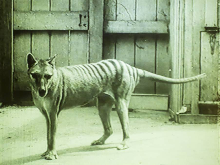 Tasmanian tiger sightings map