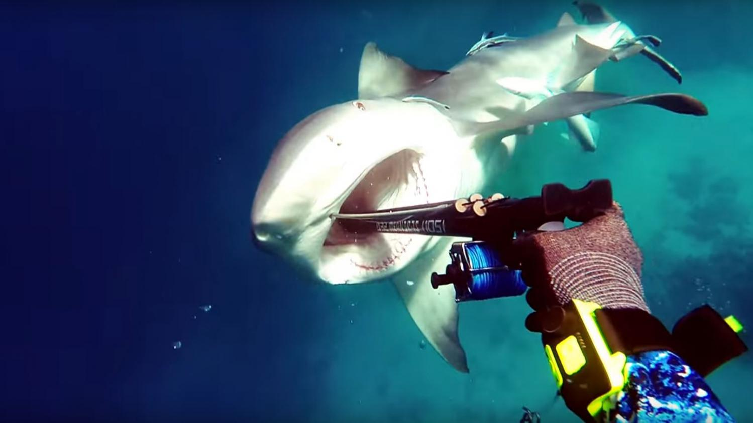 British diver stalked by shark for hours