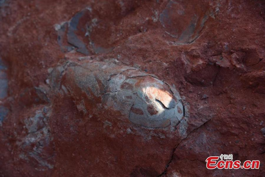 Dinosaur Eggs Discovered in China: New 'Jurassic Park' Finding?