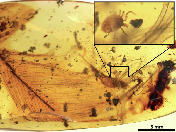 Dinosaur blood found in mosquito fossil, says new research
