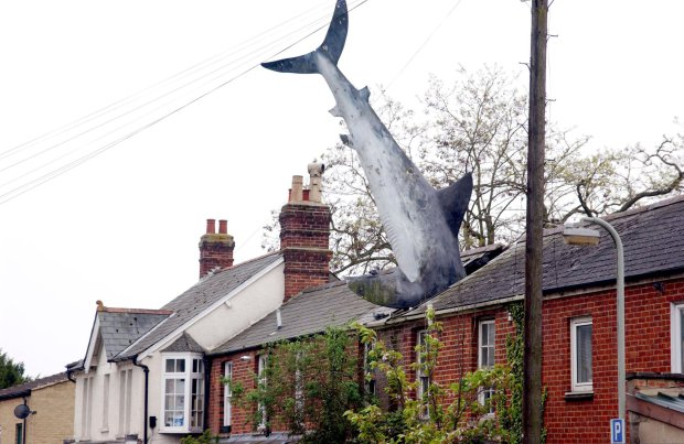 House with White Shark sticking out its roof to become a protected tourist spot