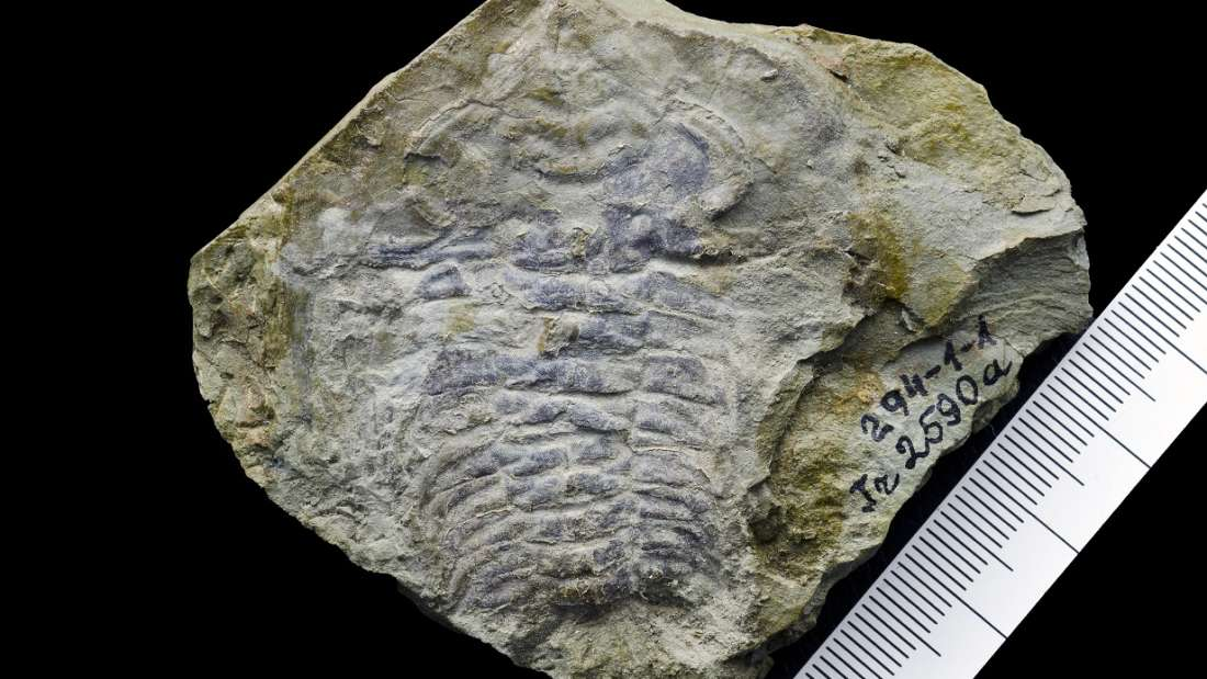 530-mln-year-old fossil may contain worlds oldest eye