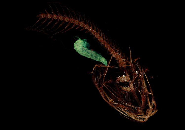 Scientists Discover The Ocean's Deepest Fish Yet