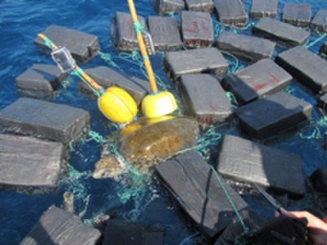 Turtle rescued after being found tangled in 800 kilograms of cocaine