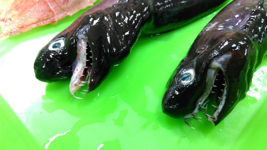 Alien Sharks found in Pacific near Taiwan (Picture)