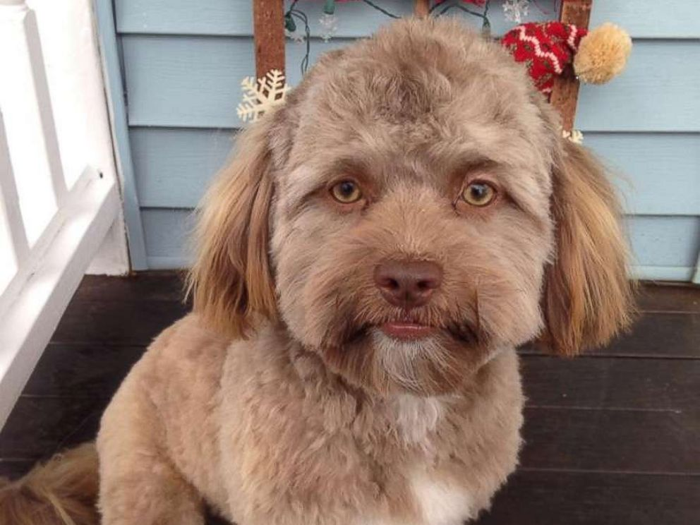 Dog With Human Face goes viral on Twitter