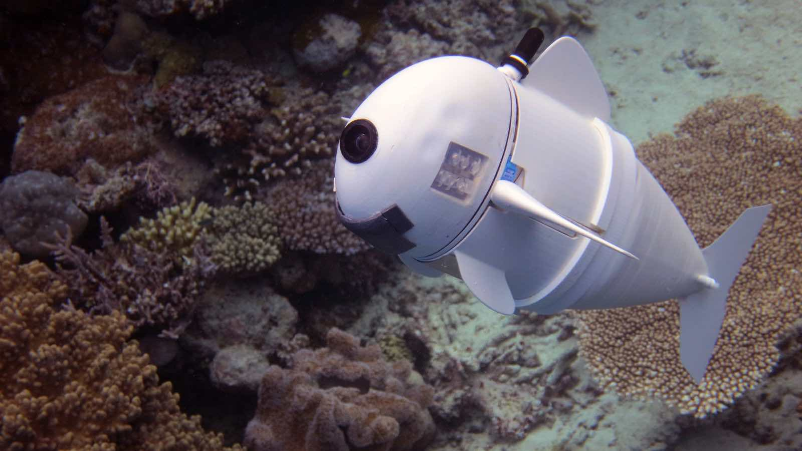 MIT's robot fish is eerily realistic (Watch)
