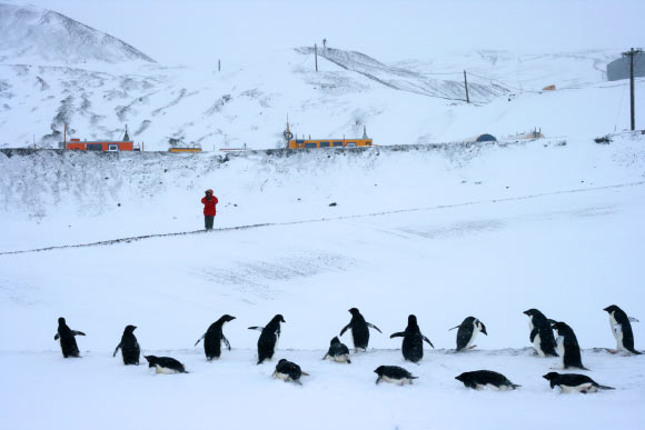 Big increase is Antarctic Snowfall helps to prevent sea level rise