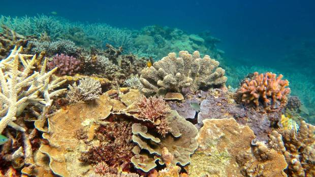 Great Barrier Reef 'cooked' by marine heatwave, says new research