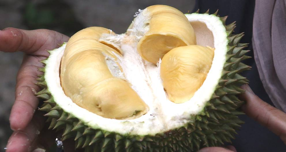 Rotten durian causes Melbourne library evacuation