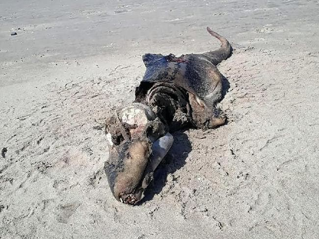 Mystery 'crocodile-like' creature washes up on Brit beach