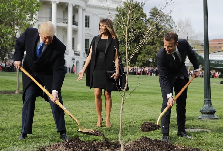 Trump, Macron tree planted on White House lawn mysteriously disappears
