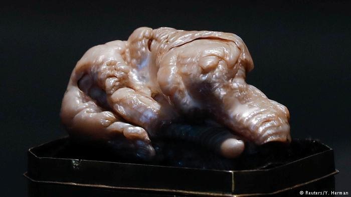 Sleeping Lion Pearl Sold at Auction for $374,000, Report