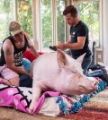 Esther the Wonder Pig diagnosed with cancer after CT scan