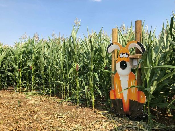 Giant 'Gromit' spotted in field near Bristol