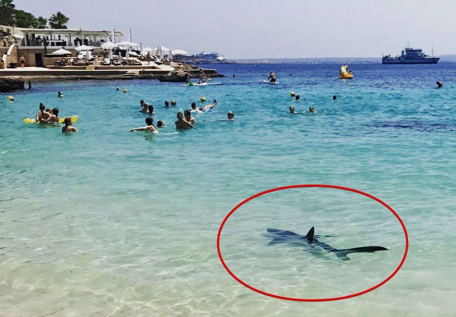 Shark in Majorca beach? Tourists panic as shark sparks beach evacuation