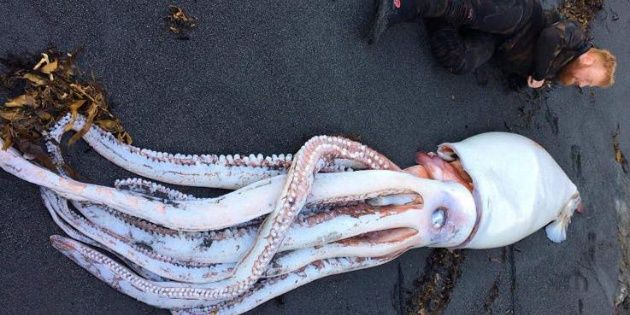 Wellington Brothers Find Monster Squid in New Zealand (Photo)