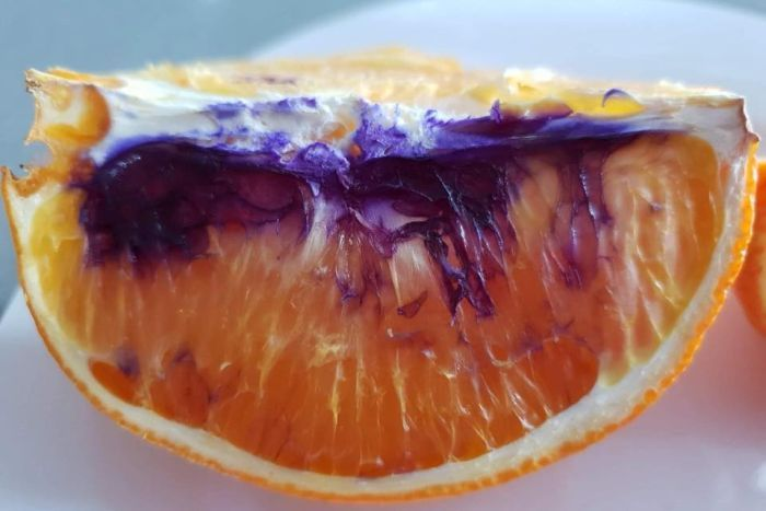 Brisbane Orange Turns Purple hours after being sliced (Photo)