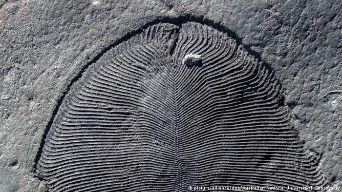 Earliest animal: Fossil Fat Reveals Weird Creature