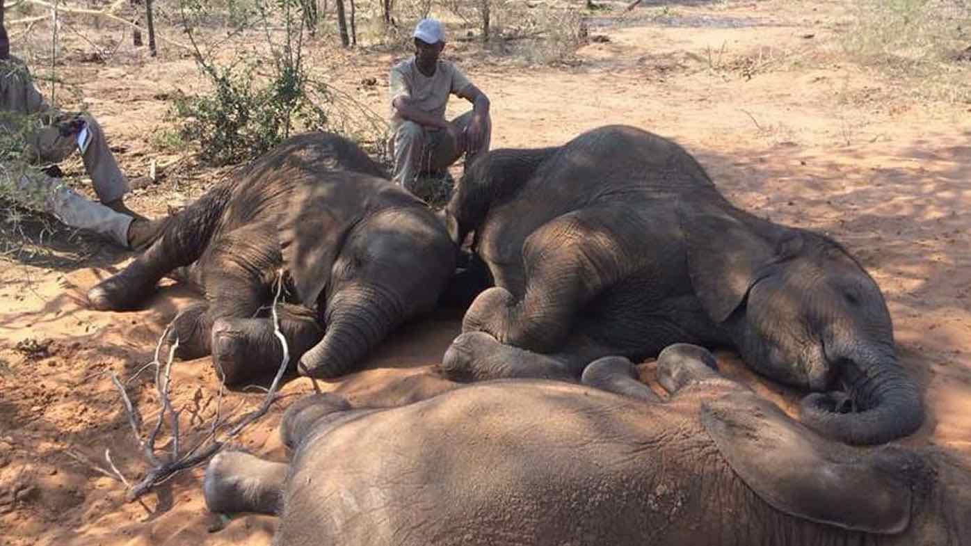 Elephants found dead near Botswana wildlife sanctuary, Report