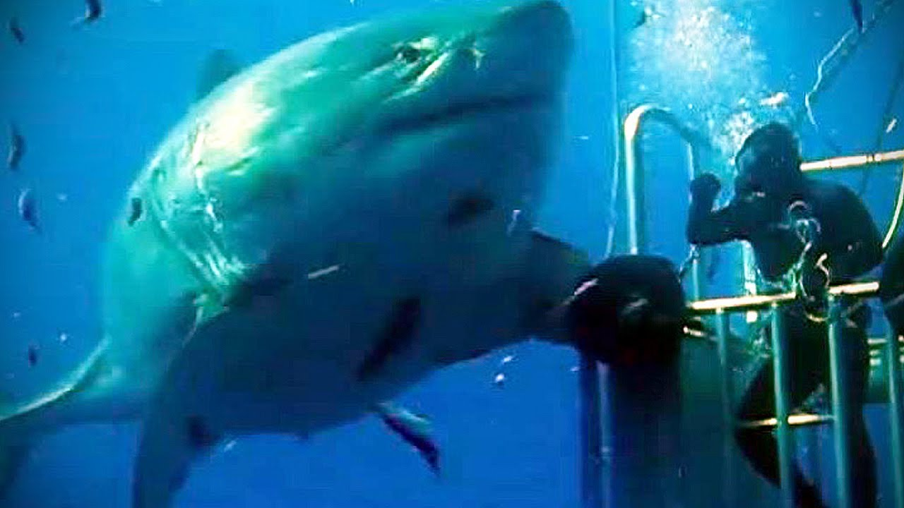 Great white shark lair discovered in Pacific Ocean, Report