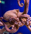 Octopuses on ecstasy: What Happened Was Profound
