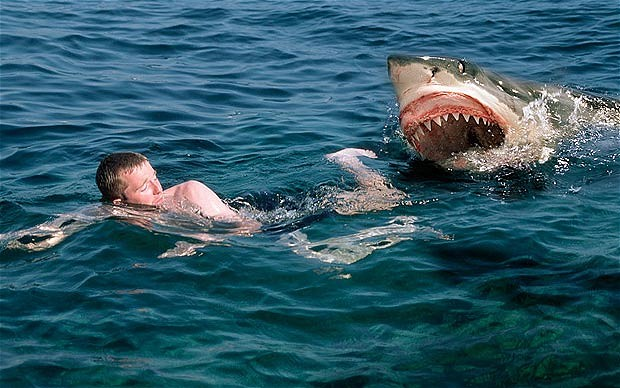 Shark Attack in Cape Cod: Swimmer dies, First for State in 80 Years