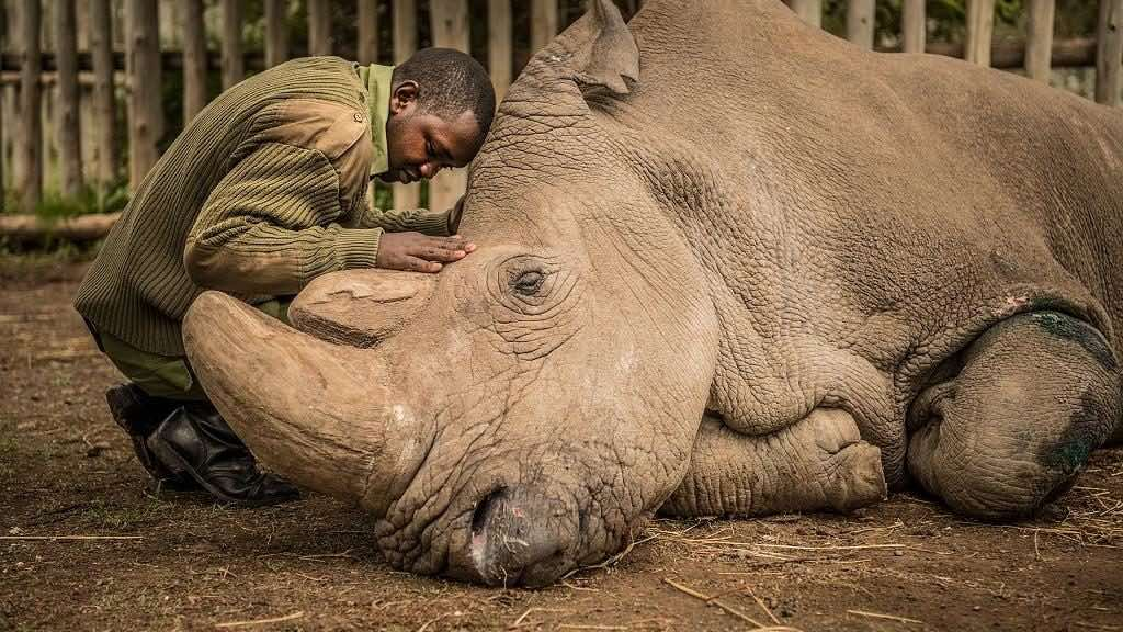 South Africa rhino poaching drops significantly, Report