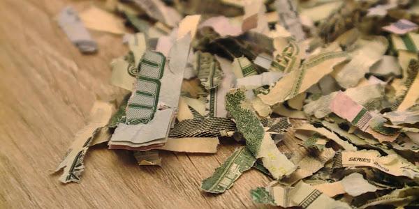 Anti-Capitalist Toddler Shreds $1000 of Parents' Cash, Report