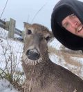 Couple rescue deer from frigid water in rowboat (Watch)