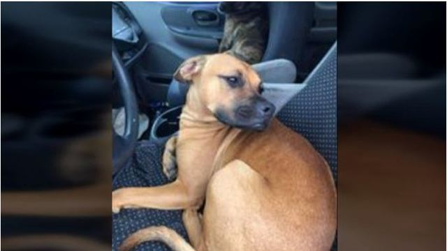 Dog shoots Sonny Gilligan owner while hunting for rabbits