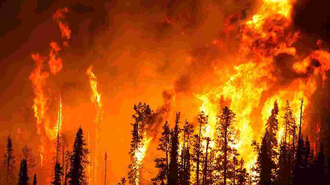 Trump California fire visit: 'The big problem we have is management'