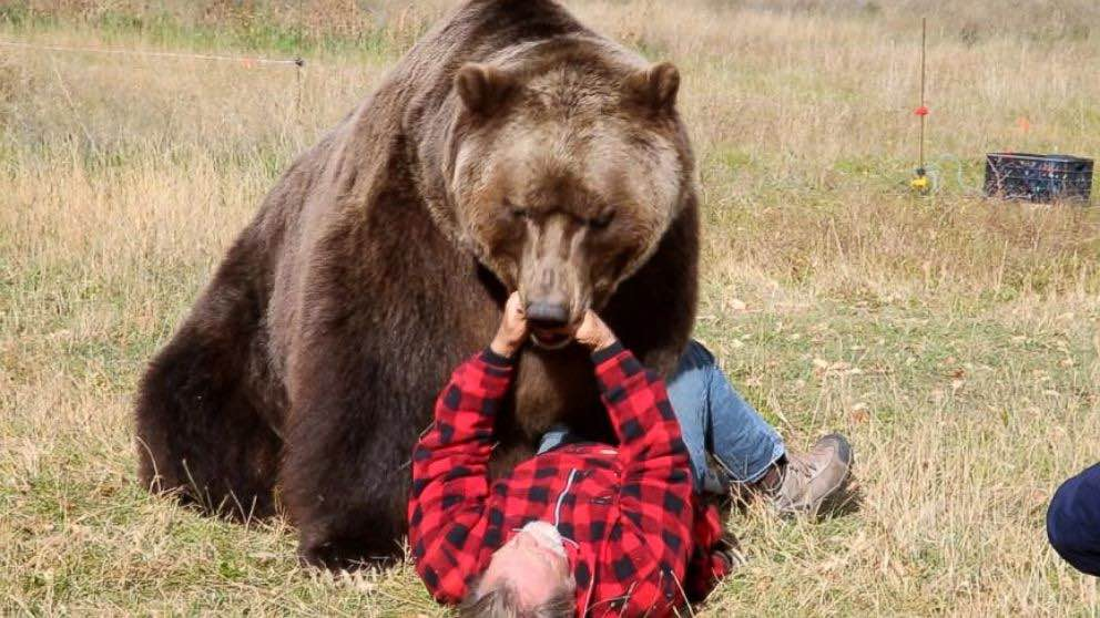 Yukon bear attack: Mom, baby killed by grizzly bear (Reports)
